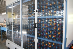 Geflügelhof Ludwig Waiblingen Färberei bunte Eier Kühlung