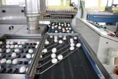 Geflügelhof Ludwig Waiblingen Färberei bunte Eier gekochte Eier