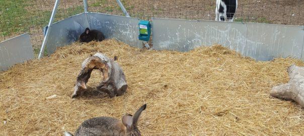 Unser Streichelzoo gegenüber unserem Hofladen in Kleinhegnach hat neue Hasen, Enten und Gänse bekommen